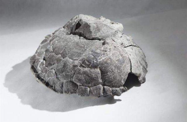 Cea mai veche fosila de broasca testoasa din lume
