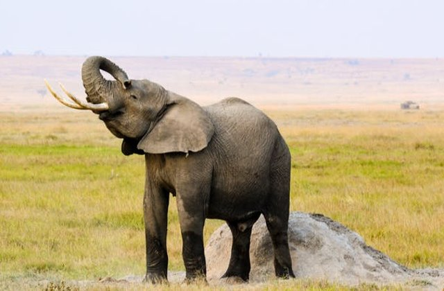 Un elefant salbatic a omorat doua femei, iar alte patru au fost ranite