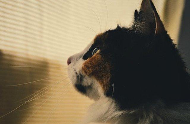 O pisica a supravietuit unei calatorii de 3000 de kilometri, dupa ce a stat inchisa 12 zile intr-un container fara resurse