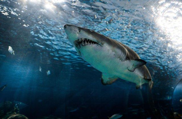 Ramasite umane, descoperite in stomacul unui rechin