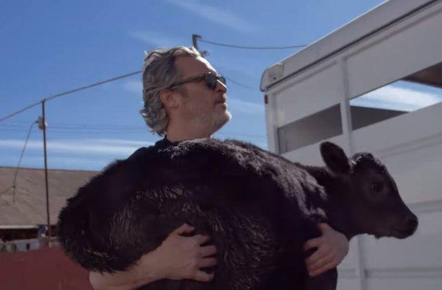 Actorul Joaquin Phoenix a salvat o vaca si un vitel de la un abator /VIDEO