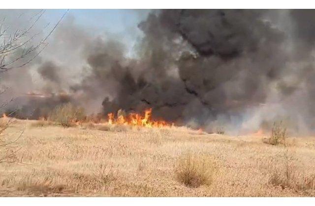 Delta Vacaresti a fost incendiata intentionat