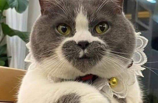 Trasaturile lor sunt unice si adorabile: 7 pisici care nu trec neobservate