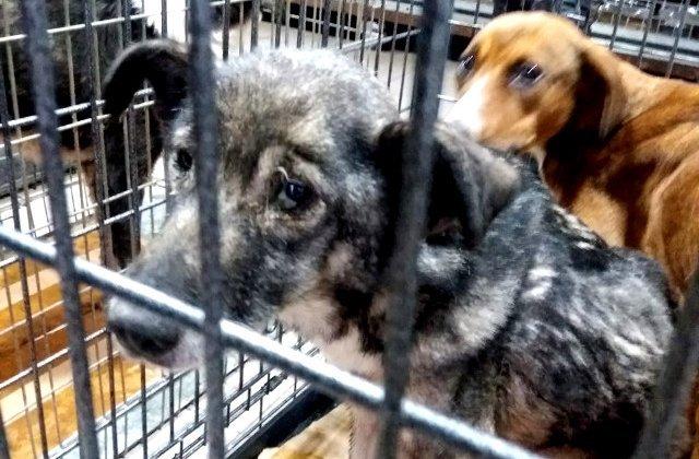 Un oraș din China interzice consumul de câini și pisici după epidemia de coronavirus