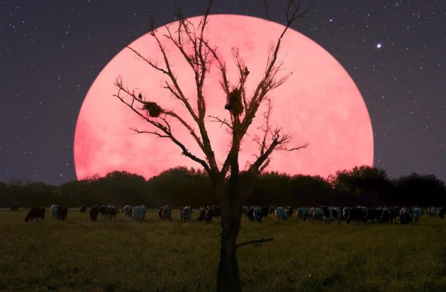SuperLuna roz: Când te poți bucura de cea mai strălucitoare Lună a anului