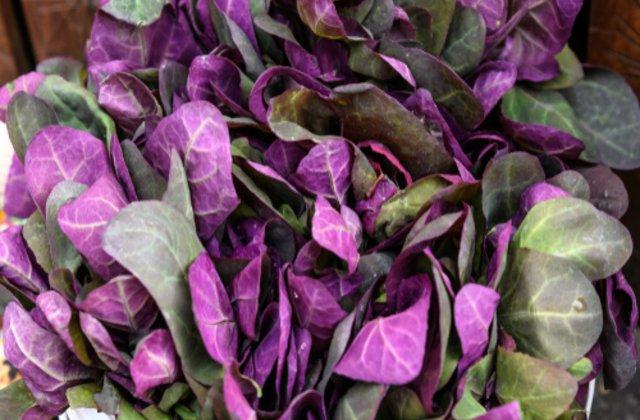 Loboda - beneficii extraordinare pentru sănătate. De ce este bine să consumi această plantă de sezon