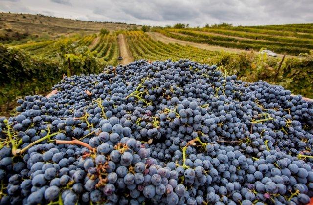 Platforma care te ajută să vizitezi cramele viticole românești din confortul propriei case