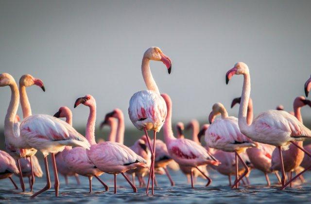 VIDEO Țara în care cerul a devenit ROZ! Păsările flamingo au invadat locul, după restricțiile Covid-19