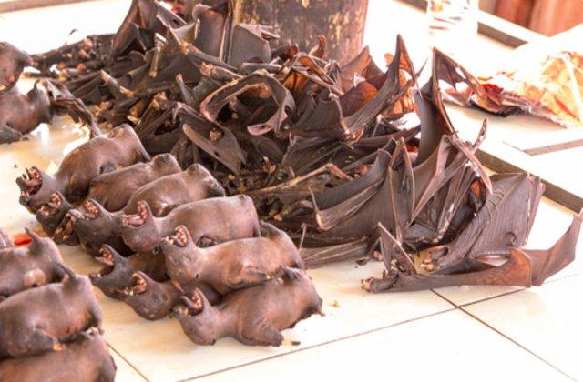 Imagini revoltătoare: În piețele umede din Indonezia, ÎNCĂ se vând lilieci pentru consum
