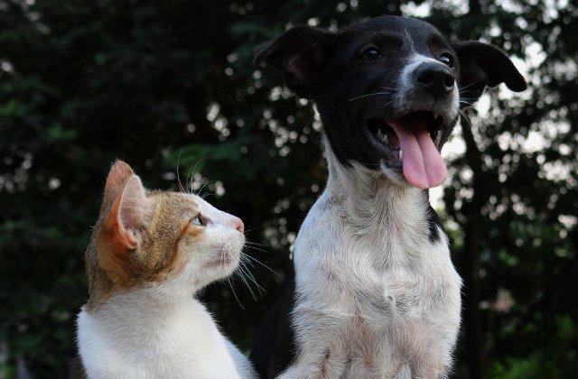 Abuzate și abandonate. Multe animale de companie suferă enorm în perioada pandemiei