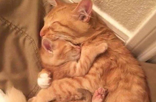 Cel mai sigur loc din lume: 8 poze care demonstrează că în brațele mamei e cel mai bine
