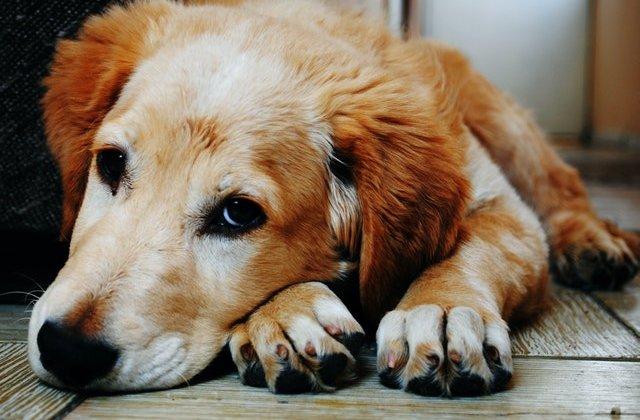Lecție de iubire și devotament: Un câine și-a așteptat trei luni, în holul spitalului, stăpânul ucis de COVID-19