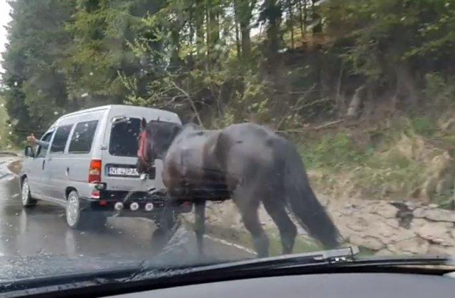 VIDEO Animalele sunt în continuare maltratate. Un bărbat și-a legat calul de mașină și a mers cu el prin ploaie timp de 3 ore