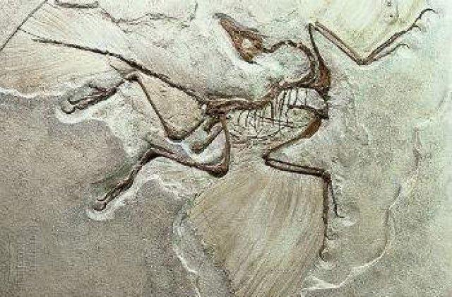 Fosilele unui nou tip de reptila zburatoare, descoperite in Romania