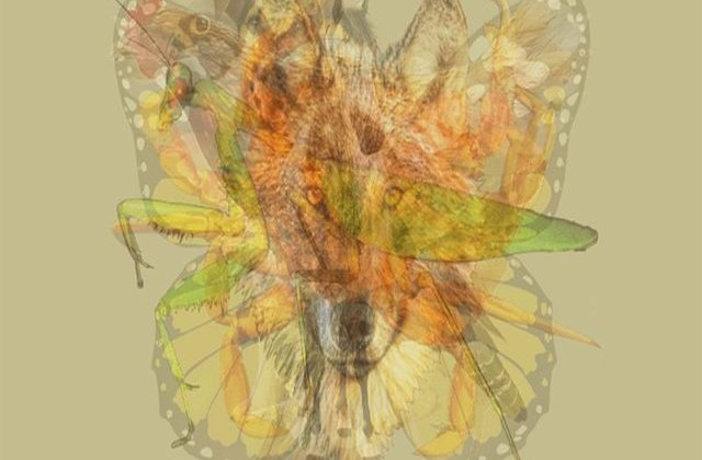 Testul care îți dezvăluie personalitatea. Ce animal vezi prima dată în acest desen?