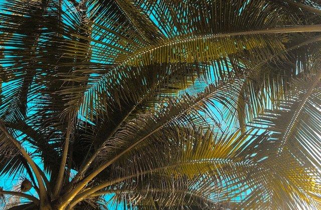 VIDEO Și-au transformat curtea într-un paradis subtropical