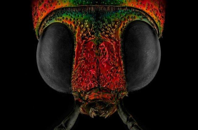 FOTO Și-a transformat frica de gândaci într-o carieră de success. Cele mai tari imagini