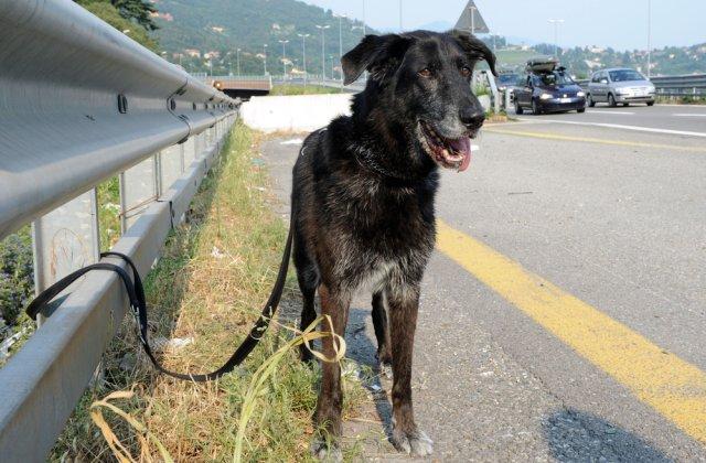 Situație revoltătoare! Câinii adoptați în timpul pandemiei sunt trimiși înapoi la adăpost sau abandonați