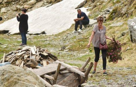 Femeie surprinsă cu o tufă întreagă de bujor de munte. Specia e...