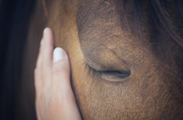 Animalele sunt în continuare torturate! Un bărbat din Vaslui a fost surprins în timp ce schingiuia un cal