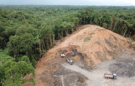 Pădurile din Europa se află în mare pericol!