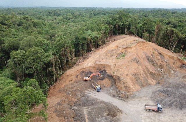 Pădurile din Europa se află în mare pericol! Pierderea de biomasă a crescut cu 69% în ultimii ani