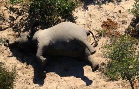 FOTO Sute de elefanți au fost găsiți morți în Botswana