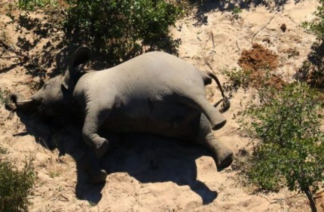 FOTO Sute de elefanți au fost găsiți morți în Botswana. Cercetătorii nu au descoperit cauza exactă a deceselor