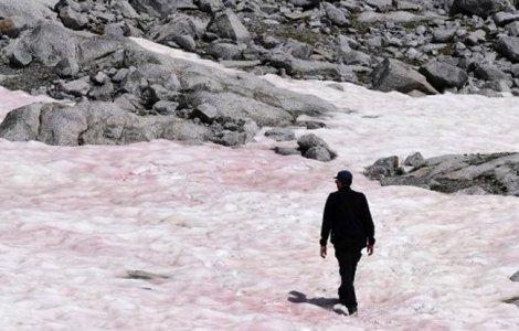 Zăpada roz din Munții Alpi ar putea avea consecințe cumplite