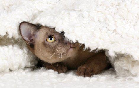 O pisică a adormit în mașina de spălat, dar a supraviețuit miraculos