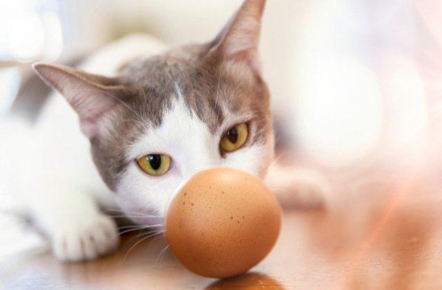 VIDEO Clipul care te va înduioșa. Ce se întâmplă atunci când dai un ou unei pisici