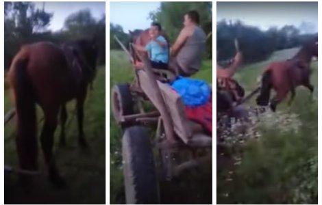 VIDEO Cal chinuit și bătut de stăpânul care a vrut să se dea mare...