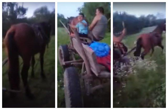 VIDEO Cal chinuit și bătut de stăpânul care a vrut să se dea mare pe internet