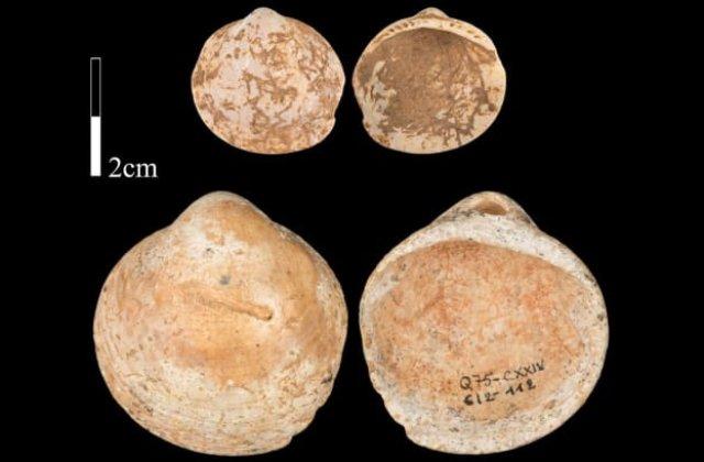 STUDIU Oamenii purtau coliere făcute din scoici în urmă cu peste 120.000 de ani