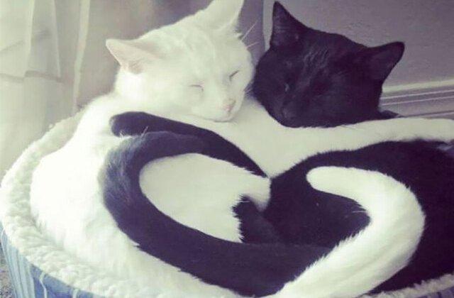 Pisicile dorm în cele mai drăgălașe poziții: 10 imagini haioase cu pisici care pot dormi oricum