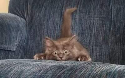 FOTO Vor să te sperie, dar...