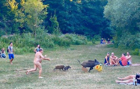 FOTO Un bărbat complet dezbrăcat a fugărit un mistreț cu doi pui