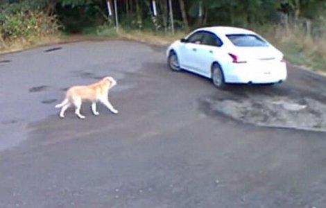 VIDEO Momentul tulburător în care un câine este abandonat de...