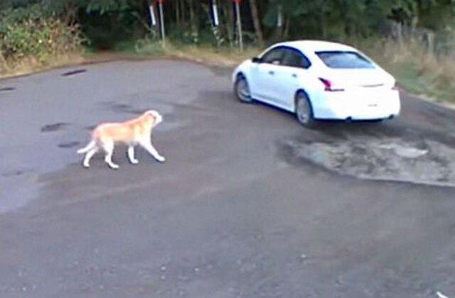 VIDEO Momentul tulburător în care un câine este abandonat de stăpânul său