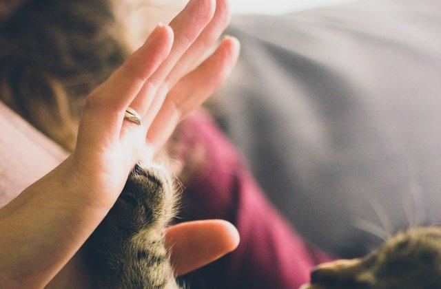 Puterea vindecătoare a iubirii: 10 animale înainte și după ce au fost adoptate
