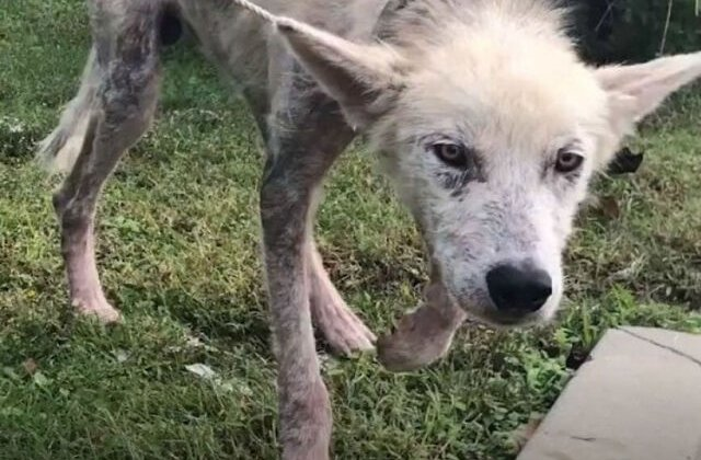 FOTO Cruzime fără limite: Și-a înfometat câinele pentru a se răzbuna pe soție pentru că a divorțat de el