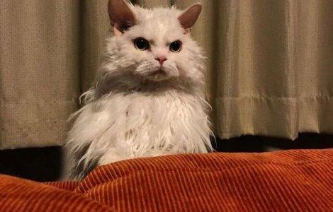 FOTO Chirico, pisicuța care pare să nu fie niciodată mulțumită