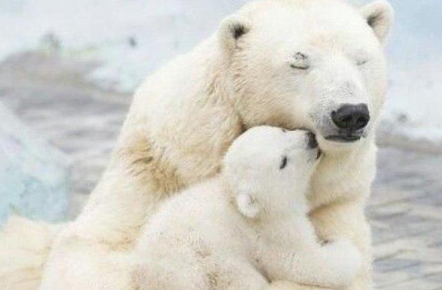 Iubirea de mama, mai presus decât orice: 10 imagini adorabile cu animale și puii lor