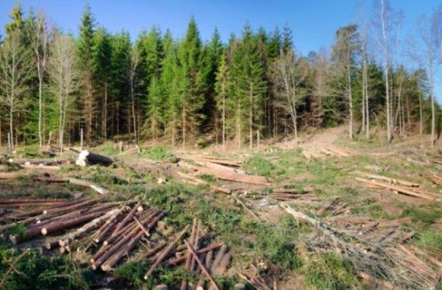 Noul Cod Silvic, aprobat: furtul de arbori devine faptă penală