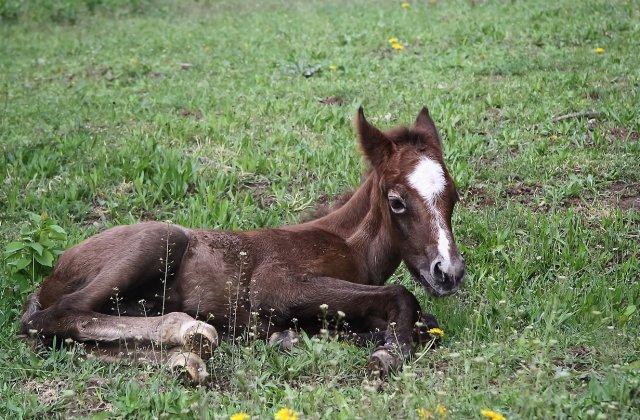 Situație șocantă în Franța! Au fost raportate zeci de atacuri ritualice macabre asupra cailor