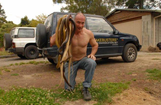 Efectul neobișnuit al coronavirusului: s-au înmulțit îngrijorător șerpii în Australia