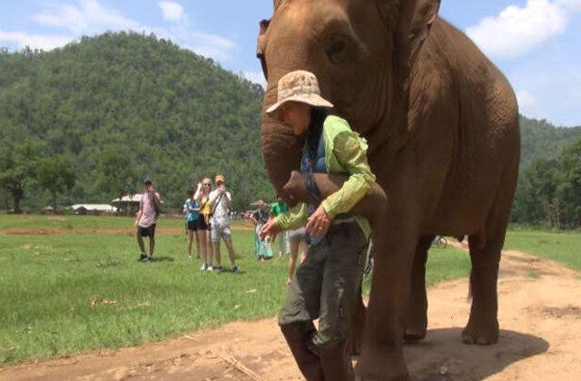 VIDEO Motivul emoționant pentru care acest elefant împinge vizitatorii