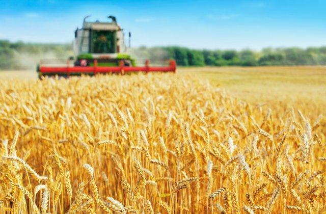 APIA începe să plătească despăgubiri fermierilor ce au fost afectați de secetă