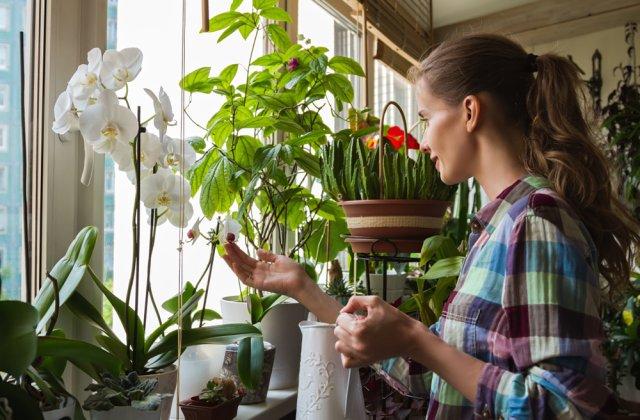 Rezistă mai bine decât orice buchet de flori: 12 plante de apartament ușor de întreținut
