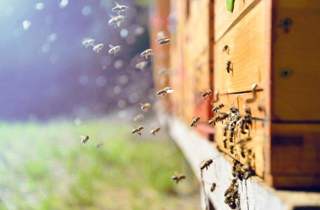 Apicultorii vor primi ajutor de minimis în valoare de 25 de lei pe familia de albine